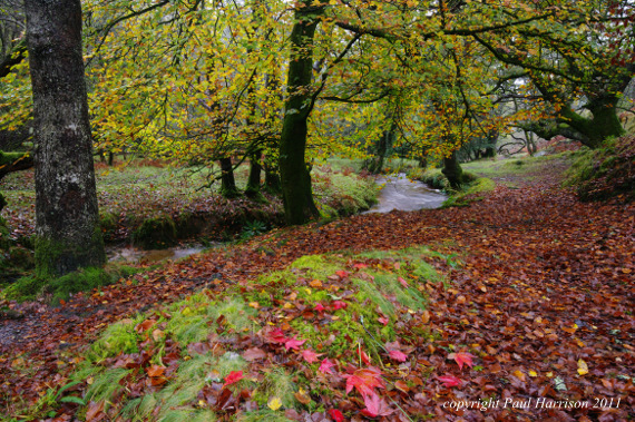 Autumn woods, Devon
