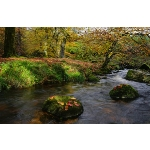 Meavy River, Devon