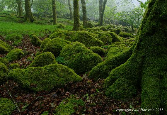 Wood near Burriton Lake, Devon