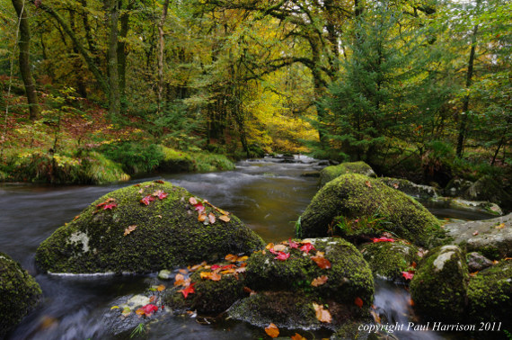 Norsworthy River, Devon, autumn