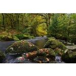 Norsworthy River, Devon, autumn