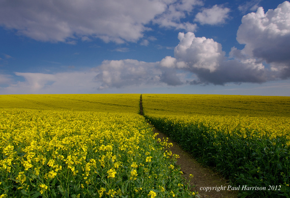 Rape field path, Sussex