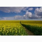 Rape field path, Sussex