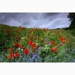 Wild flowers, Sussex