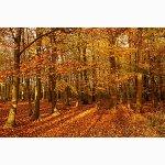 Holtye Wood, East Grinstead