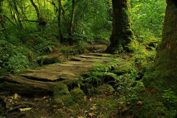 Forest floor, Dartmoor