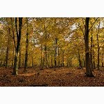 Dover woods
