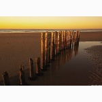 Posts on the beach at West Wittering