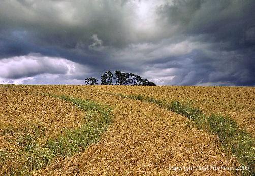 Duncton Hill