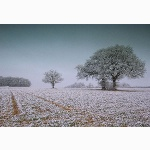 Coolham Hill, Sussex, in winter