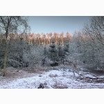 Dorking hills, winter