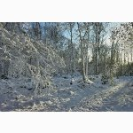Snow-covered trees near Horsted Keynes, Susssex